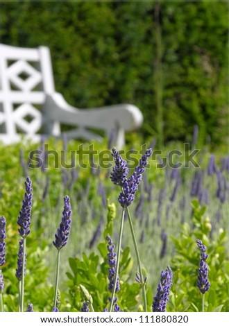 lavender garden seat