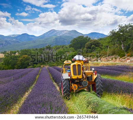 lavender harvest, Rhone-Alpes, France - stock photo