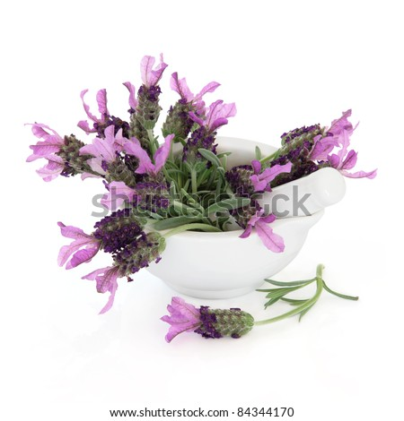 Lavender herb flower and leaf sprigs in a porcelain mortar with pestle isolated over white background. Lavandula. - stock photo