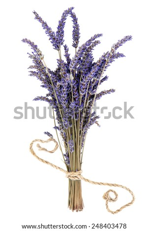 Lavender herb flower bunch over white background. Lavandula angustifolia. - stock photo