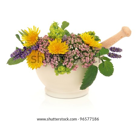 Lavender herb, valerian, ladies mantle and dandelion flower heads with aloe vera, sage and lemon balm leaf sprigs in a  mortar with pestle isolated over white background. - stock photo