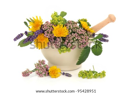 Lavender herb, valerian, ladies mantle and dandelion flowers with aloe vera, sage and lemon balm leaf sprigs in a cream stone mortar with pestle isolated over white background.