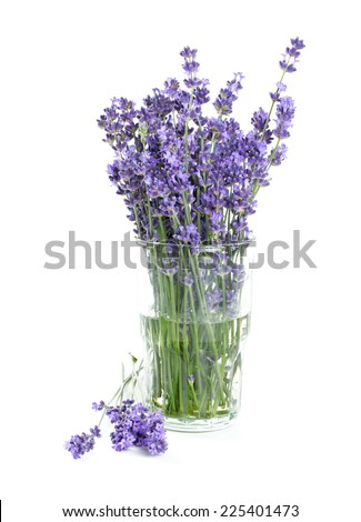 lavender in a glass isolated on white