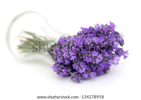 lavender in a glass pitcher - stock photo