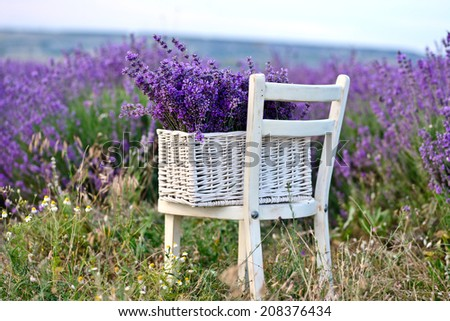 lavender in the basket near the field - stock photo