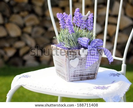 Lavender in the wooden pot placed on the metal chair in the garden. Home decoration. - stock photo