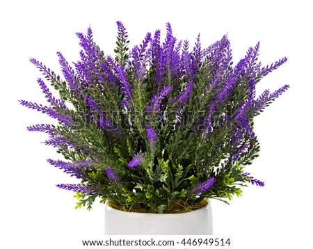 Lavender in vase isolated on white background
