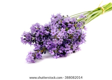 Lavender. Lavender -  Bunch of lavender flowers on a white background. Lavender. Lavender herbs. Lavender. flower.Lavender.  Lavender bunch. Lavender. Lavender herb.  - stock photo