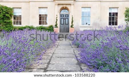 Lavender Lined Garden Path to a Georgian Era English Town House Built Circa 1750 - stock photo