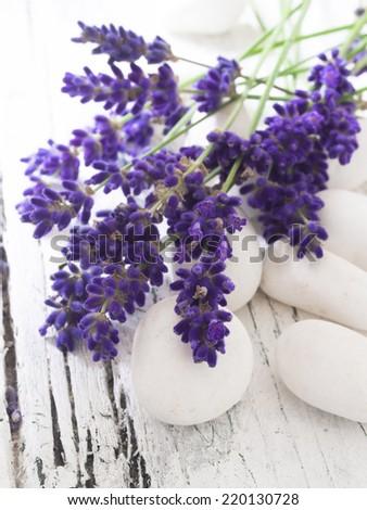 lavender on the white stones, spa - stock photo