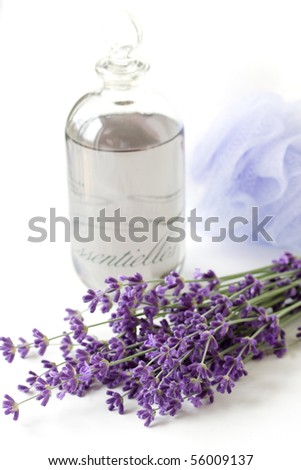 lavender plant and oil - stock photo