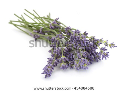 Lavender plant blossom isolated on white background