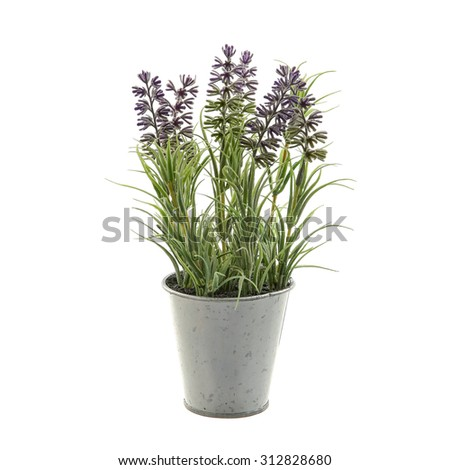 Lavender plant in a metal pot isolated on white background - stock photo