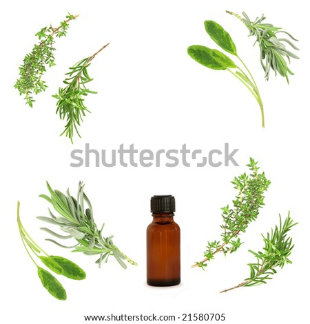 Lavender, sage, rosemary and thyme herbs leaf sprigs in abstract circular design, with aromatherapy  essential oil bottle. Over white background. - stock photo