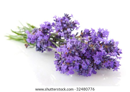 Lavender sprigs isolated on a white background