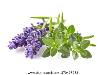 Lavender with thyme spices - stock photo