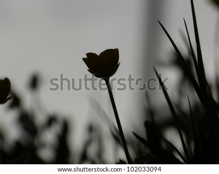 Lawn and flower as background - stock photo