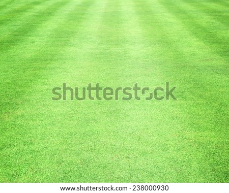 Lawn background - stock photo