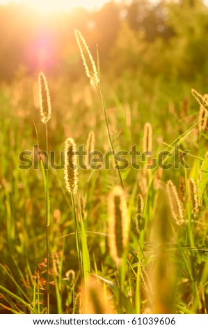 Lawn filled with light