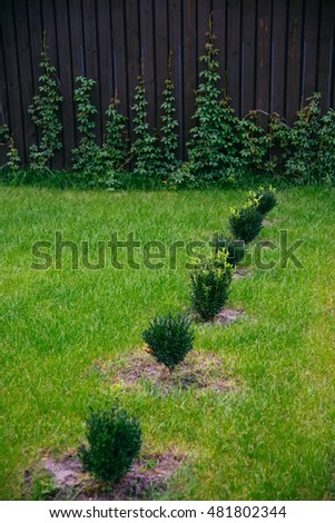 Lawn on the backyard with bushes and a dark wooden fence. Yard exterior elements.