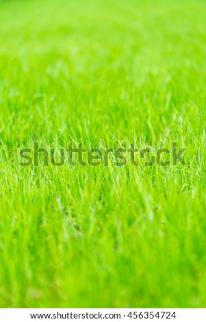 Lawn with a fresh green grass, background - stock photo