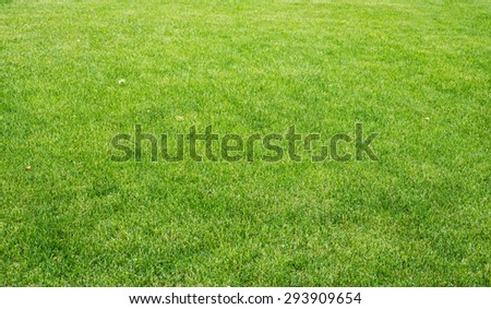 Lawn with different plants, nature background. Close-up view - stock photo