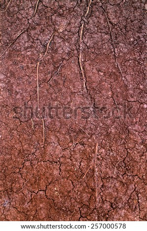 Layer of dry soil cracks to the root. - stock photo