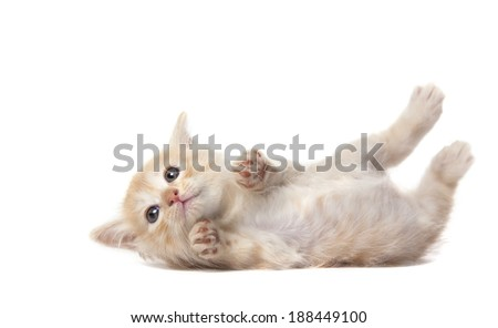 laying kitten isolated over white background - stock photo