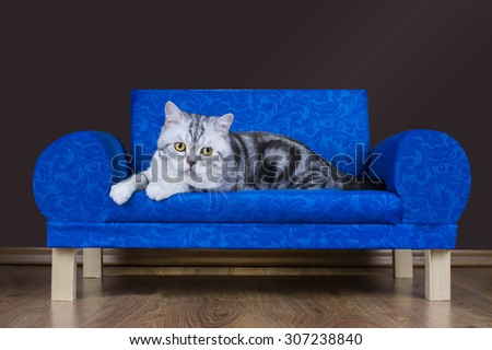 lazy cat is resting on the couch - stock photo