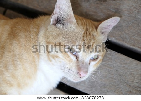 Lazy cat lying down on the wooden floor - Soft focus