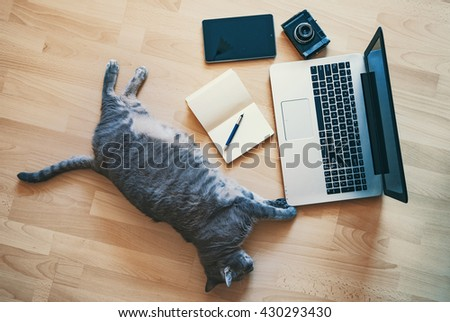 Lazy cat - working concept - stock photo
