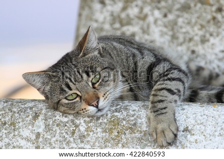 lazy male european cat laying on a stone bench