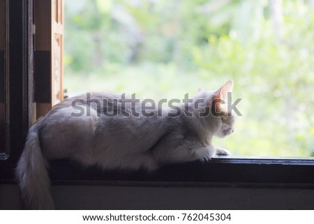 Lazy white cat sitting on the window in fine warm day