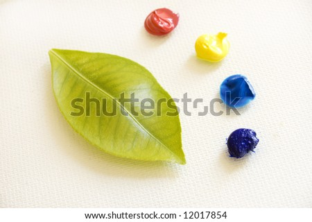 leaf and basic oil colors , natural colors concept