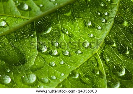 leaf and drop