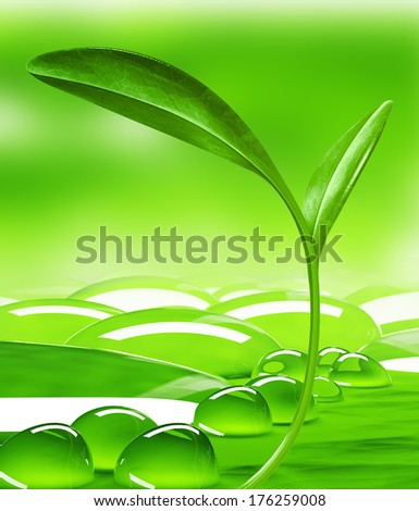 leaf and drops           - stock photo