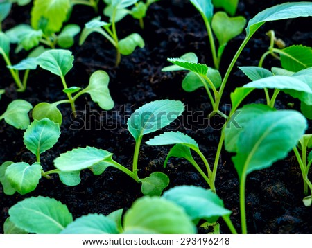 Leaf and earth. - stock photo