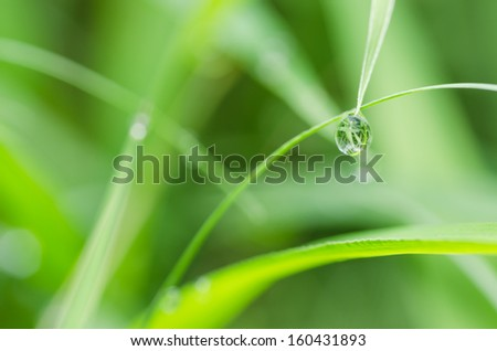Leaf and water drops in the nature concept