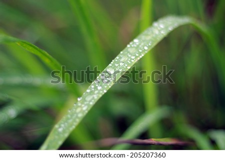 leaf and water drops on it background