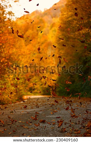leaf autumn - stock photo
