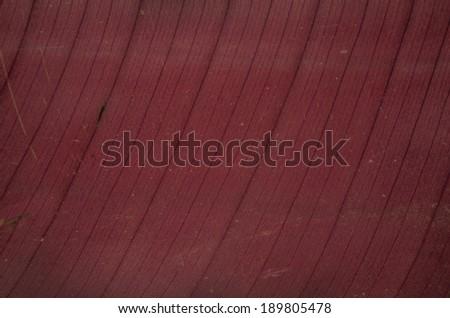 leaf background close up - stock photo