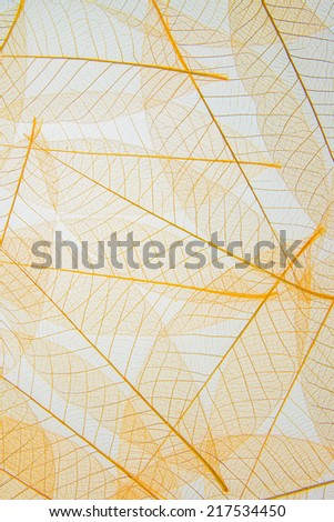 Leaf cell structure - macro natural texture - stock photo
