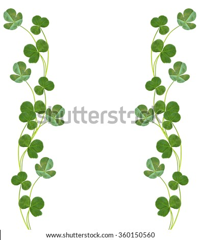 leaf clover on white background. Green foliage - stock photo