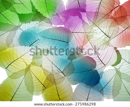 Leaf color texture background