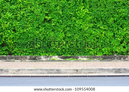 Leaf-covered wall