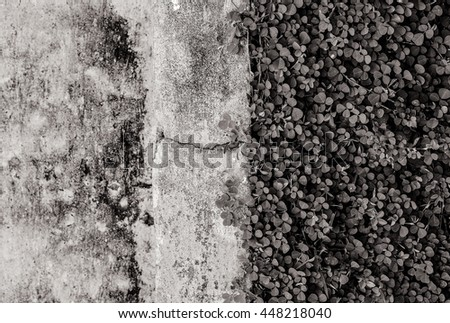 Leaf creeper plant on painted concrete floor black and white Copy Space vertical background texture. - stock photo