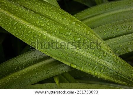 Leaf Drops - stock photo