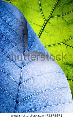 leaf element - stock photo