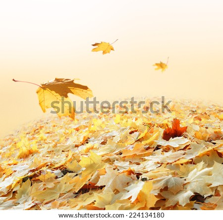 Leaf fall. Collage - stock photo