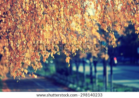 leaf fall in autumn park landscape